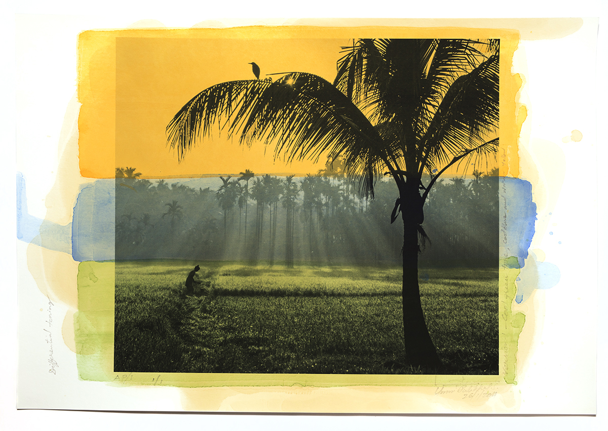 'The paddy field in Kodaly', printed 2014, stained 2017, pigment stained photograph,13 x 19 in, unique Edn.